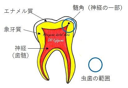 乳歯(特に奥歯)の特徴をご存知ですか?